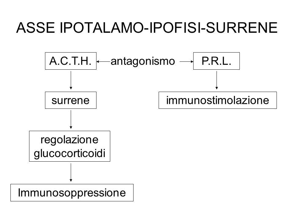 ASSE IPOTALAMO-IPOFISI-SURRENE A.C.T.H. surrene regolazione glucocorticoidi Immunosoppressione P.R.L. immunostimolazione antagonismo