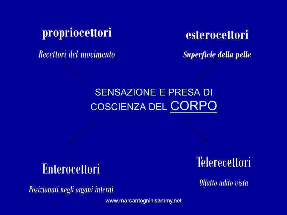 www.marcantogninisammy.net SENSAZIONE E PRESA DI COSCIENZA DEL CORPO propriocettori Recettori del movimento esterocettori Superficie della pelle Teler
