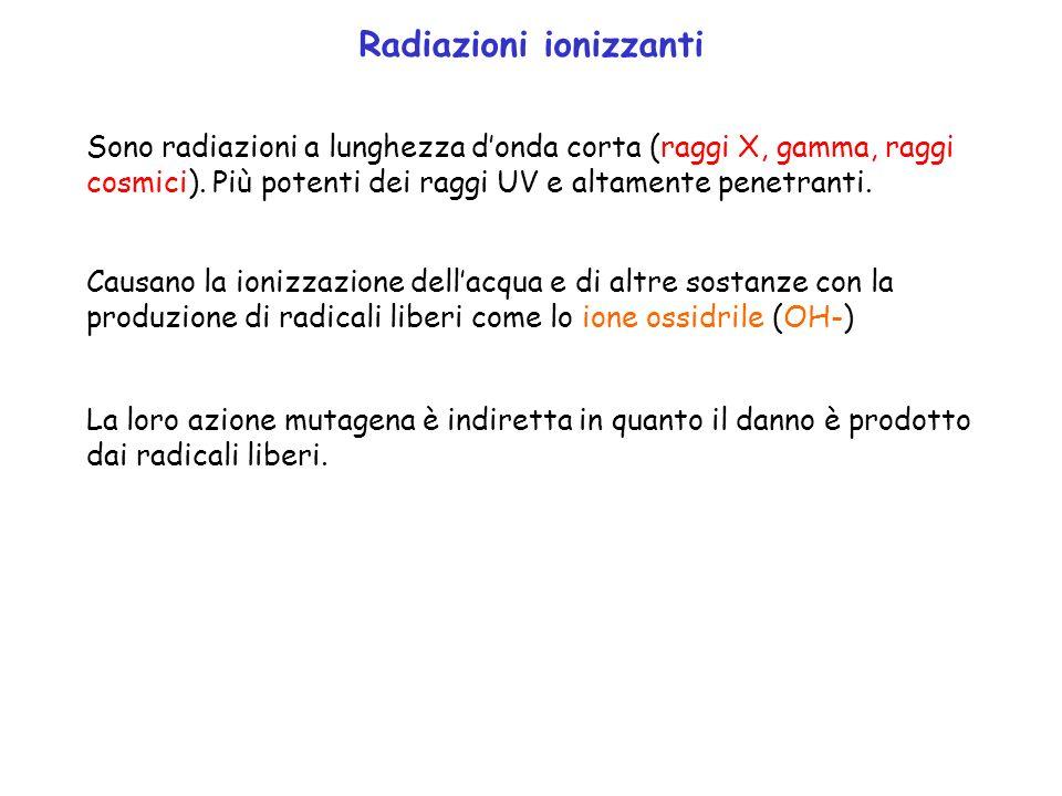 Radiazioni ionizzanti Sono radiazioni a lunghezza donda corta (raggi X, gamma, raggi cosmici). Più potenti dei raggi UV e altamente penetranti. Causan