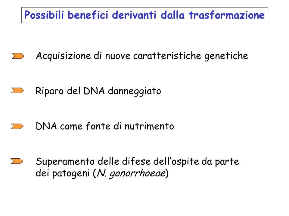 Possibili benefici derivanti dalla trasformazione Acquisizione di nuove caratteristiche genetiche Superamento delle difese dellospite da parte dei pat