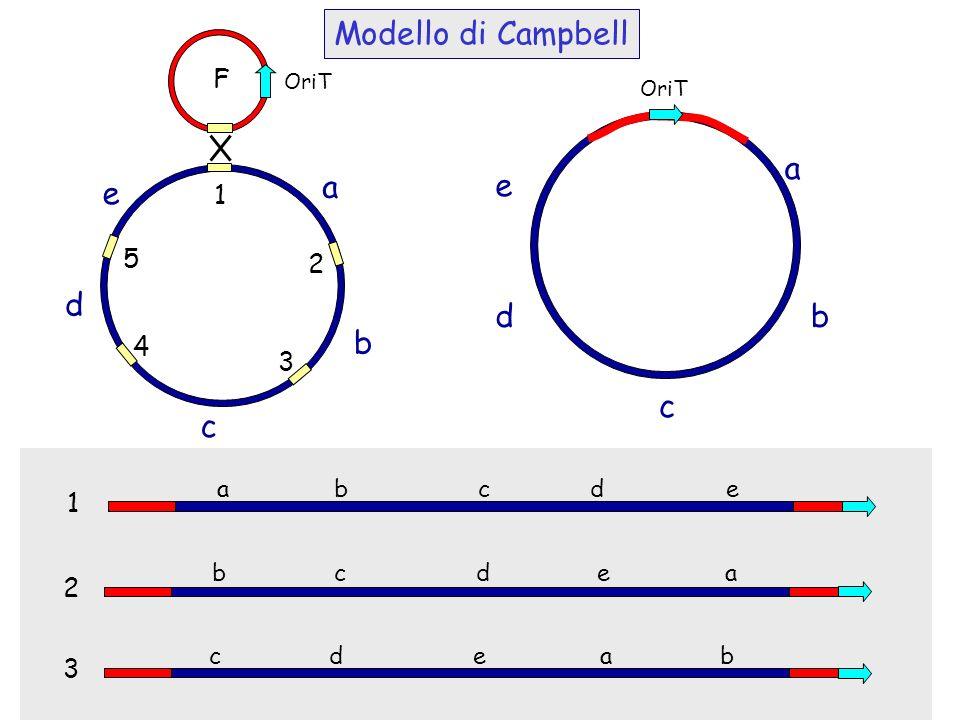 OriT a b c d e 1 2 3 4 5 a b c d e a b c d e 1 2 3 b c d e a c d e a b OriT Modello di Campbell F