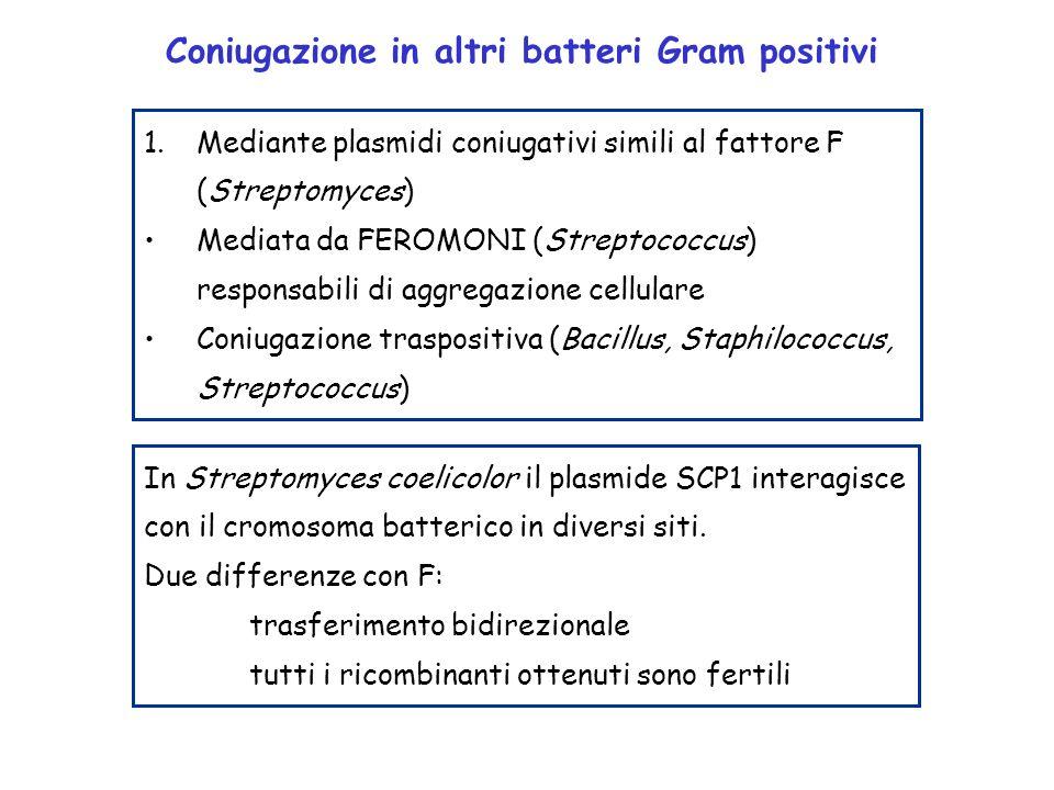 1.Mediante plasmidi coniugativi simili al fattore F (Streptomyces) Mediata da FEROMONI (Streptococcus) responsabili di aggregazione cellulare Coniugaz