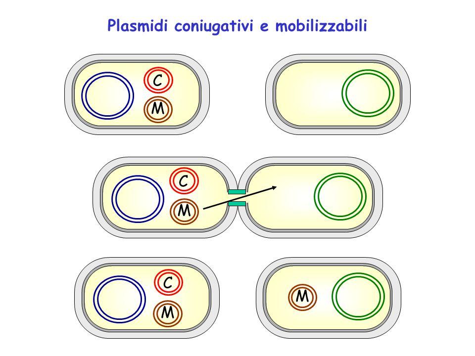 Plasmidi coniugativi e mobilizzabili C M M M C M C