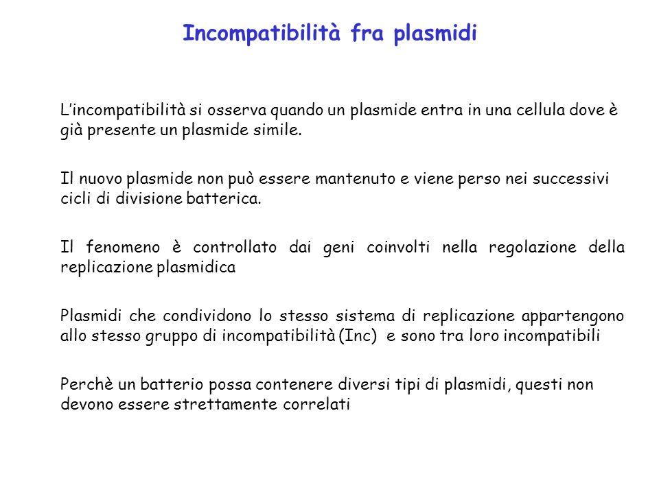 Incompatibilità fra plasmidi Lincompatibilità si osserva quando un plasmide entra in una cellula dove è già presente un plasmide simile. Il nuovo plas