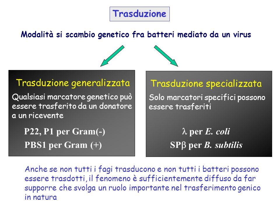 Modalità si scambio genetico fra batteri mediato da un virus Trasduzione Trasduzione generalizzata Trasduzione specializzata Qualsiasi marcatore genet