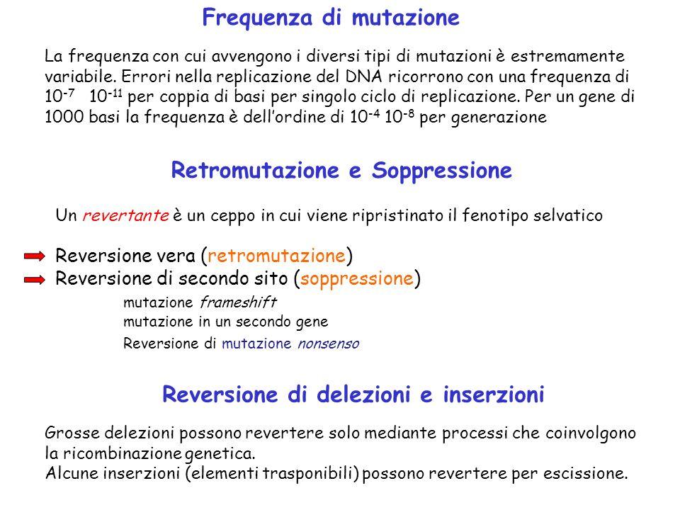 Frequenza di mutazione La frequenza con cui avvengono i diversi tipi di mutazioni è estremamente variabile. Errori nella replicazione del DNA ricorron