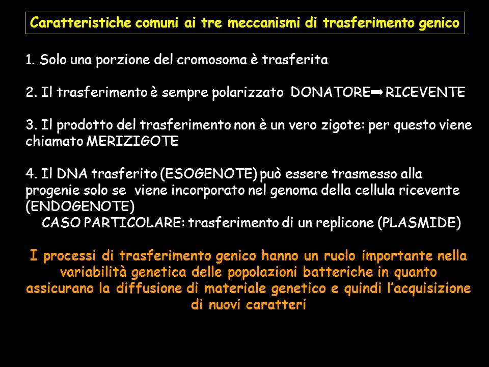 Caratteristiche comuni ai tre meccanismi di trasferimento genico 1. Solo una porzione del cromosoma è trasferita 2. Il trasferimento è sempre polarizz