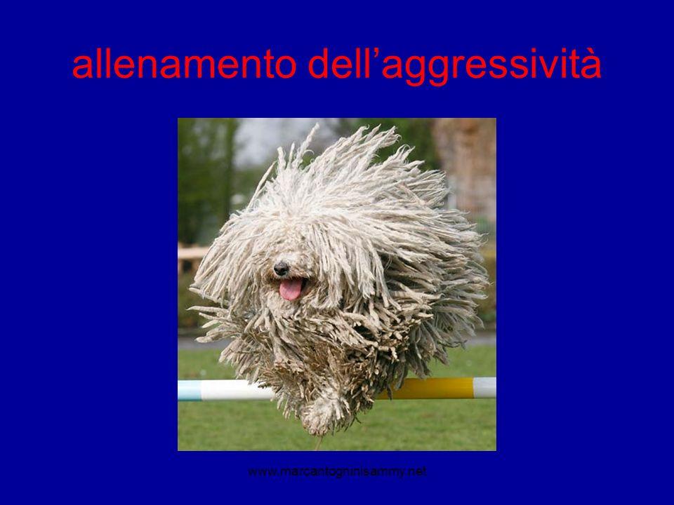 allenamento dellaggressività www.marcantogninisammy.net