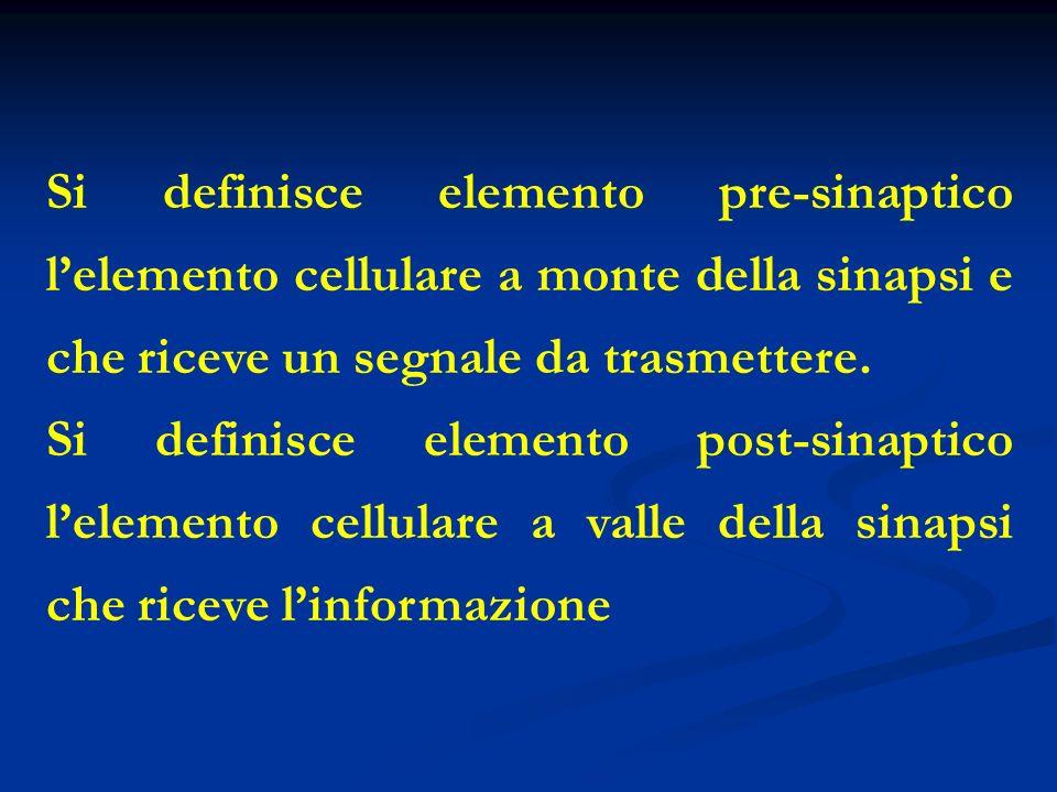 Si definisce elemento pre-sinaptico lelemento cellulare a monte della sinapsi e che riceve un segnale da trasmettere. Si definisce elemento post-sinap