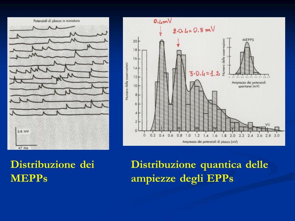 Distribuzione dei MEPPs Distribuzione quantica delle ampiezze degli EPPs