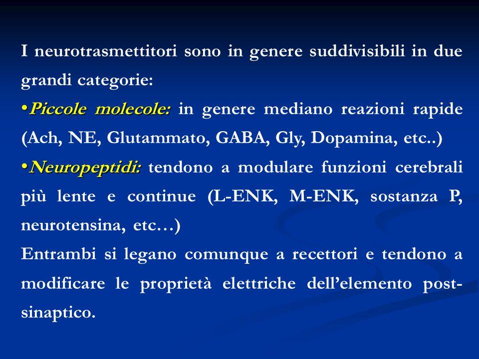 I neurotrasmettitori sono in genere suddivisibili in due grandi categorie: Piccole molecole: Piccole molecole: in genere mediano reazioni rapide (Ach,