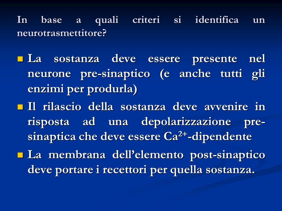 In base a quali criteri si identifica un neurotrasmettitore? La sostanza deve essere presente nel neurone pre-sinaptico (e anche tutti gli enzimi per