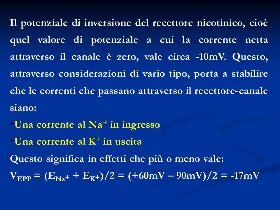 Il potenziale di inversione del recettore nicotinico, cioè quel valore di potenziale a cui la corrente netta attraverso il canale è zero, vale circa -