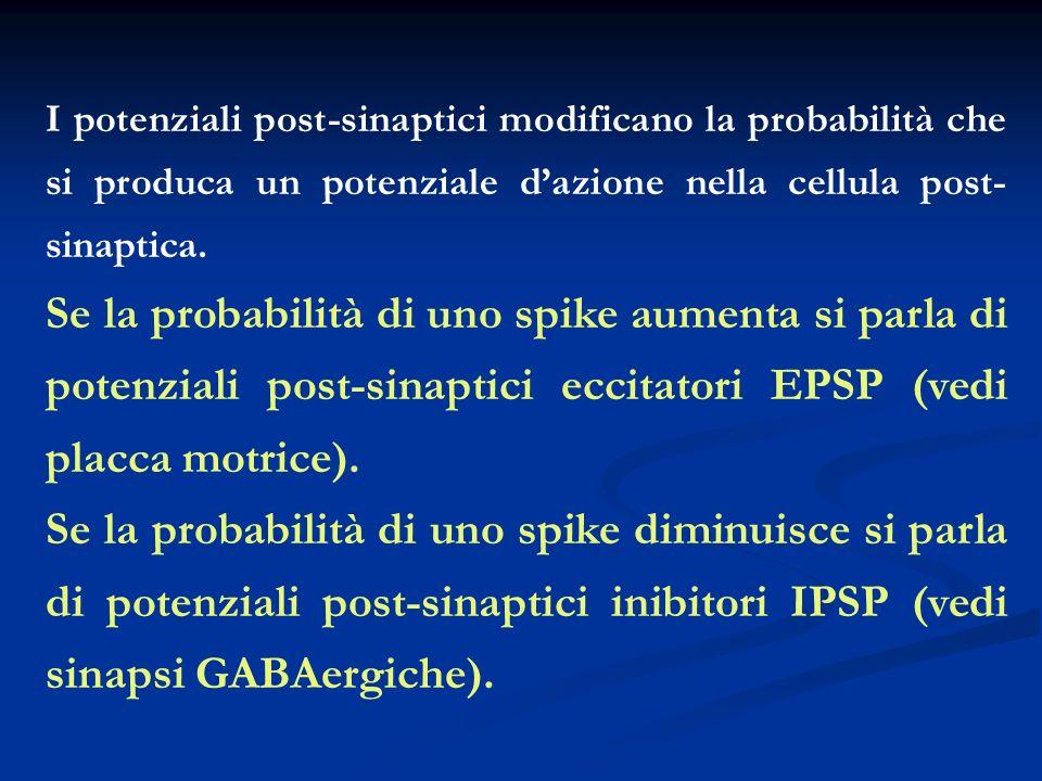 I potenziali post-sinaptici modificano la probabilità che si produca un potenziale dazione nella cellula post- sinaptica. Se la probabilità di uno spi