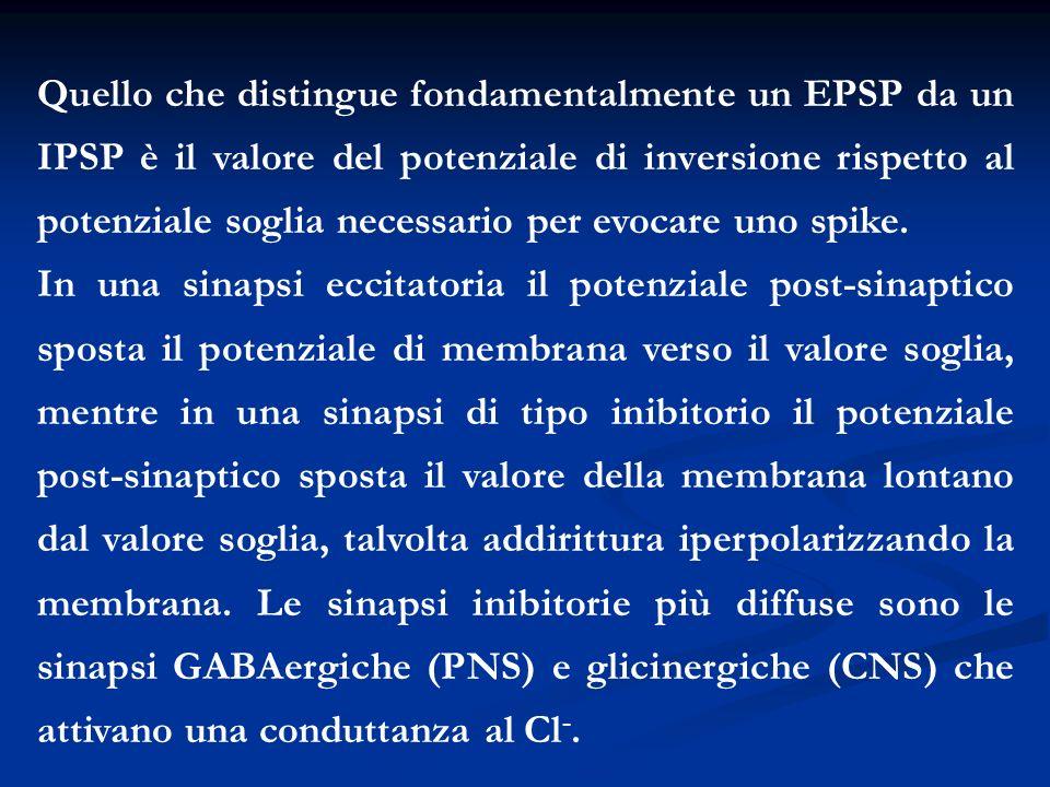 Quello che distingue fondamentalmente un EPSP da un IPSP è il valore del potenziale di inversione rispetto al potenziale soglia necessario per evocare
