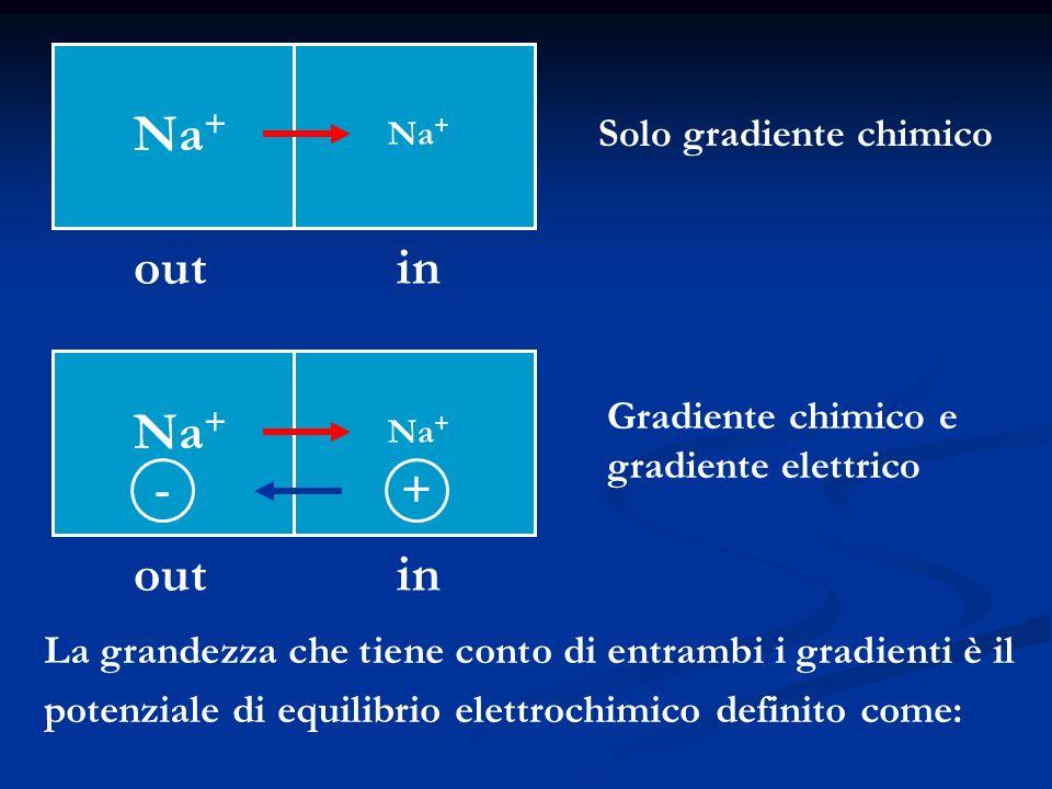 Na + out in Na + out in Solo gradiente chimico Gradiente chimico e gradiente elettrico +- La grandezza che tiene conto di entrambi i gradienti è il po