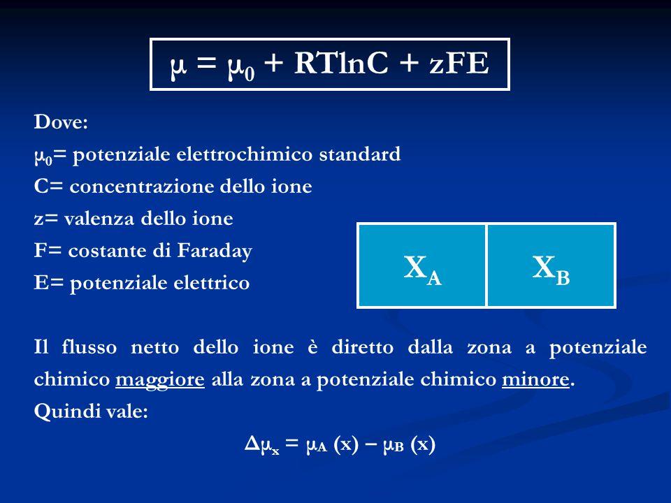 μ = μ 0 + RTlnC + zFE Dove: μ 0 = potenziale elettrochimico standard C= concentrazione dello ione z= valenza dello ione F= costante di Faraday E= pote