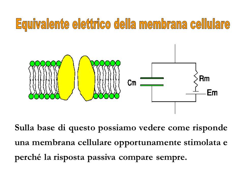 Sulla base di questo possiamo vedere come risponde una membrana cellulare opportunamente stimolata e perché la risposta passiva compare sempre.