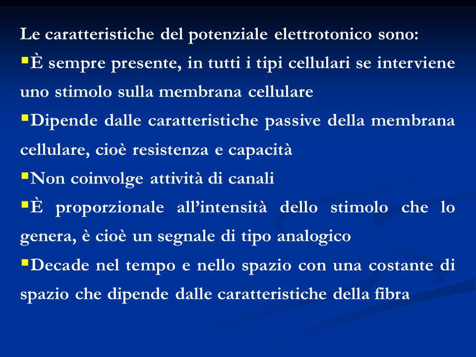 Le caratteristiche del potenziale elettrotonico sono: È sempre presente, in tutti i tipi cellulari se interviene uno stimolo sulla membrana cellulare