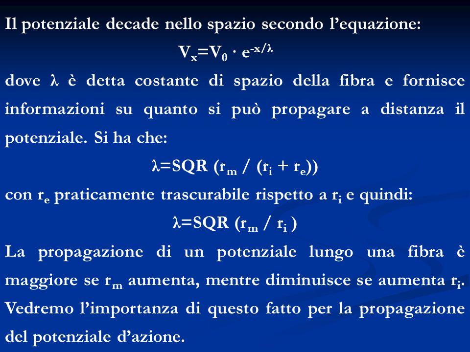 Il potenziale decade nello spazio secondo lequazione: V x =V 0 · e -x/λ dove λ è detta costante di spazio della fibra e fornisce informazioni su quant