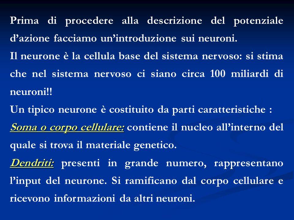 Prima di procedere alla descrizione del potenziale dazione facciamo unintroduzione sui neuroni. Il neurone è la cellula base del sistema nervoso: si s