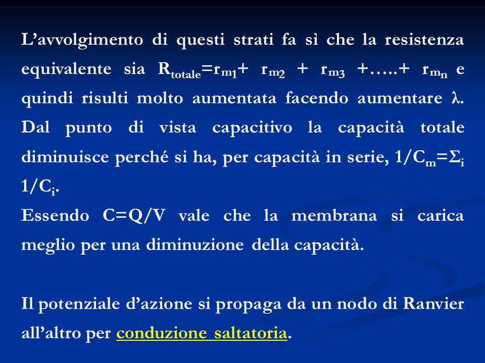Lavvolgimento di questi strati fa sì che la resistenza equivalente sia R totale =r m 1 + r m 2 + r m 3 +…..+ r m n e quindi risulti molto aumentata fa