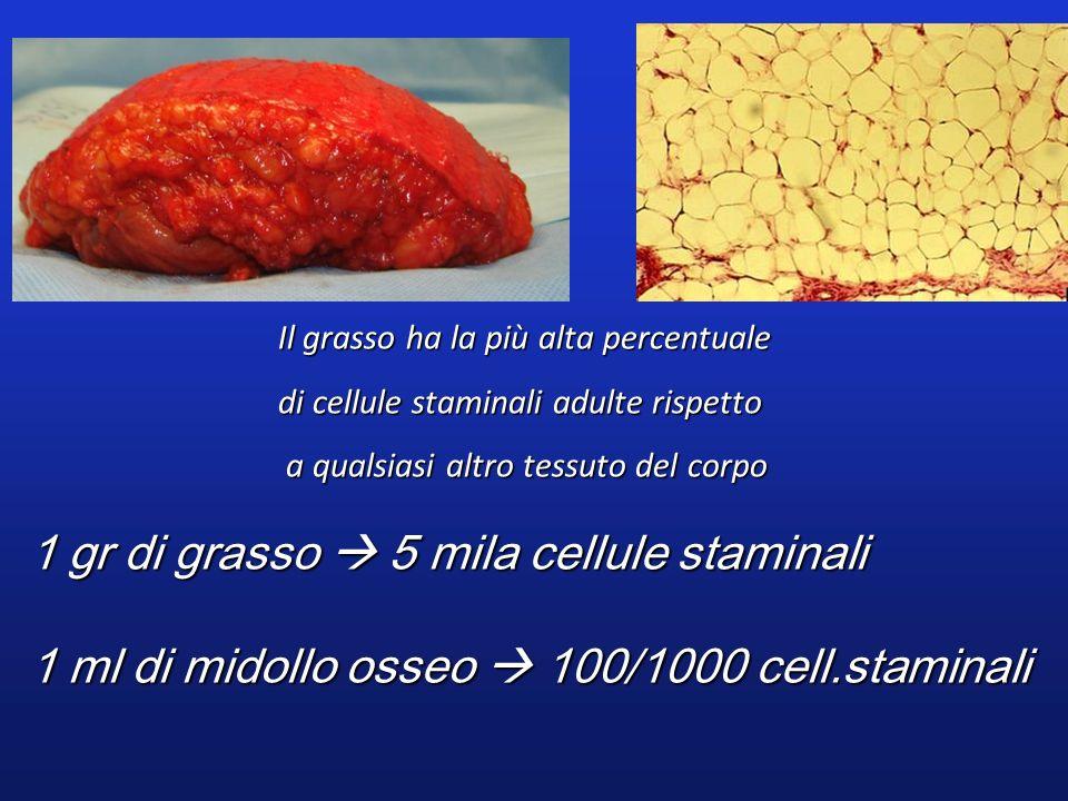 1 gr di grasso 5 mila cellule staminali 1 ml di midollo osseo 100/1000 cell.staminali Il grasso ha la più alta percentuale di cellule staminali adulte