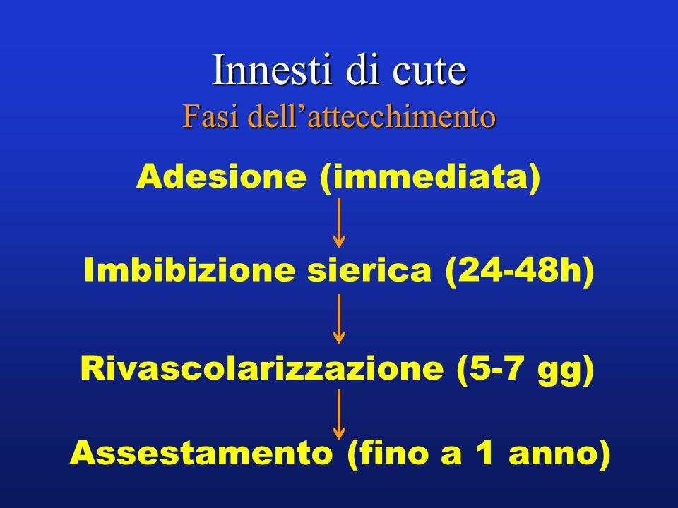 Innesti di cute Fasi dellattecchimento Adesione (immediata) Imbibizione sierica (24-48h) Rivascolarizzazione (5-7 gg) Assestamento (fino a 1 anno)