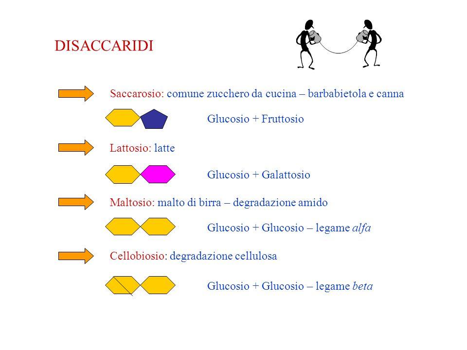 DISACCARIDI Saccarosio: comune zucchero da cucina – barbabietola e canna Glucosio + Fruttosio Lattosio: latte Glucosio + Galattosio Maltosio: malto di birra – degradazione amido Glucosio + Glucosio – legame alfa Cellobiosio: degradazione cellulosa Glucosio + Glucosio – legame beta