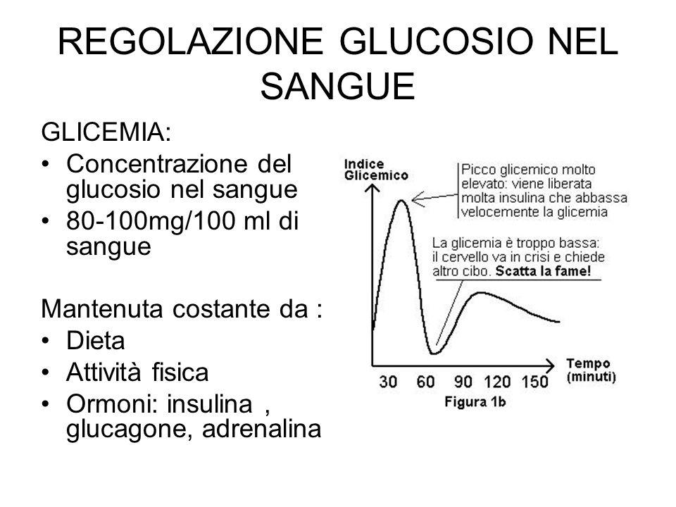 REGOLAZIONE GLUCOSIO NEL SANGUE GLICEMIA: Concentrazione del glucosio nel sangue 80-100mg/100 ml di sangue Mantenuta costante da : Dieta Attività fisica Ormoni: insulina, glucagone, adrenalina