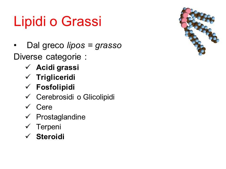 Lipidi o Grassi Dal greco lipos = grasso Diverse categorie : Acidi grassi Trigliceridi Fosfolipidi Cerebrosidi o Glicolipidi Cere Prostaglandine Terpeni Steroidi