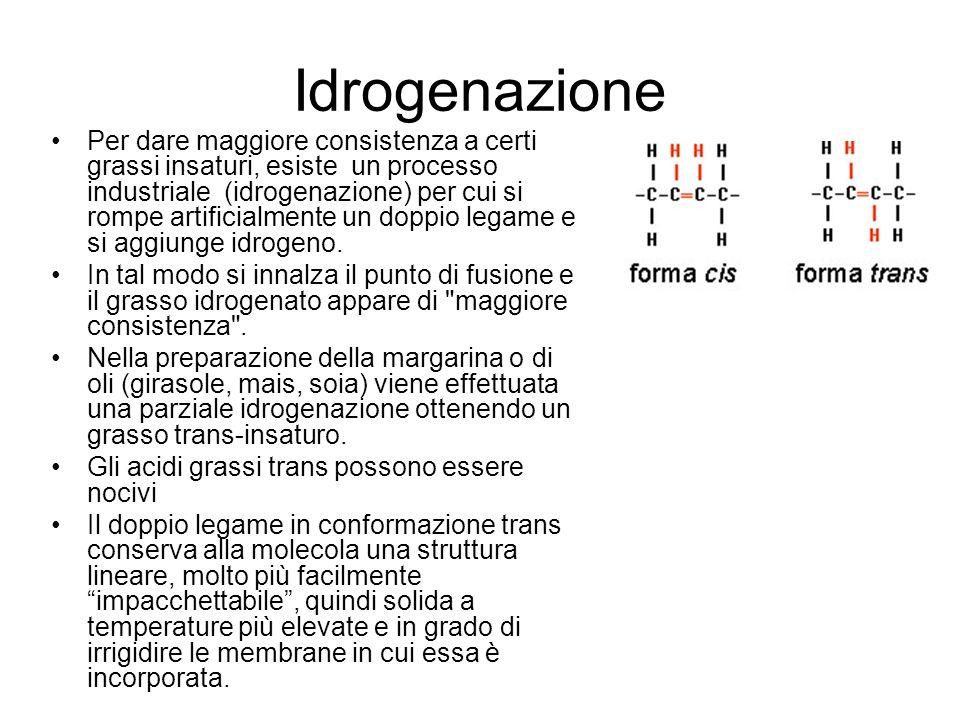 Idrogenazione Per dare maggiore consistenza a certi grassi insaturi, esiste un processo industriale (idrogenazione) per cui si rompe artificialmente un doppio legame e si aggiunge idrogeno.