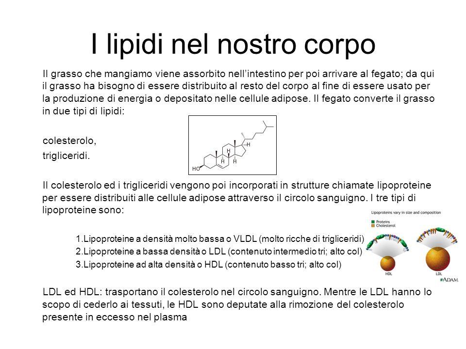 COLESTEROLO BUONO E CATTIVO Le lipoproteine che trasportano il colesterolo sono prevalentemente le LDL e le HDL.