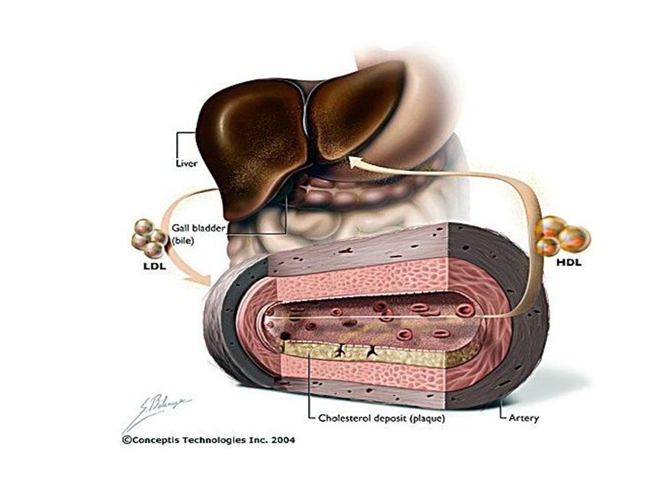 MEMBRANA CELLULARE