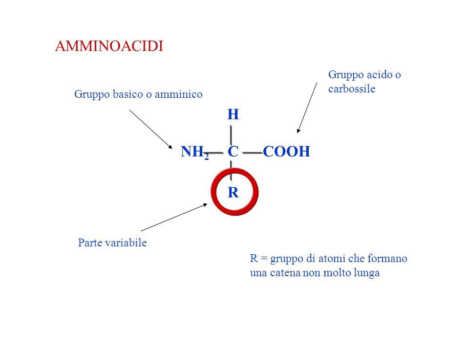 AMMINOACIDI COOH H NH 2 C R Parte variabile Gruppo acido o carbossile Gruppo basico o amminico R = gruppo di atomi che formano una catena non molto lunga
