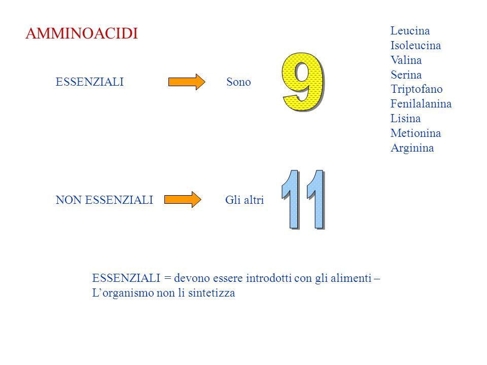 LEGAME PEPTIDICO Gli amminoacidi si legano fra loro tramite il legame peptidico http://www.arrakis.es/~lluengo/enlace.html (indirizzo origine dellanimazione)
