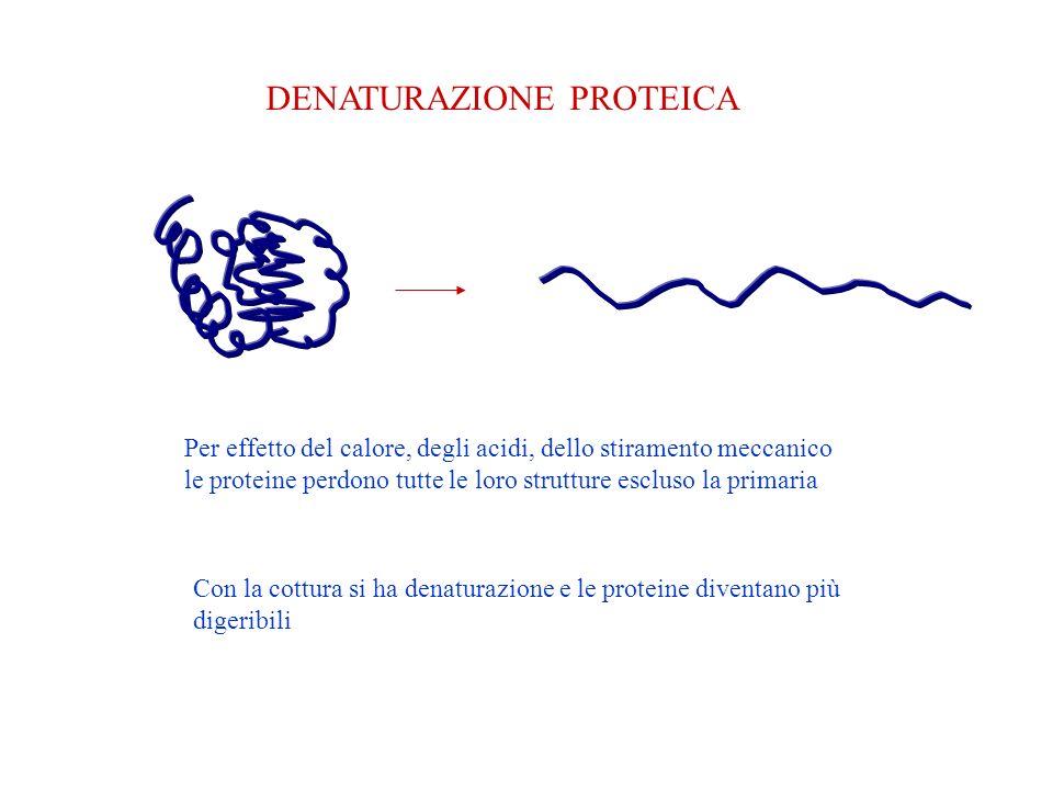 DENATURAZIONE PROTEICA Per effetto del calore, degli acidi, dello stiramento meccanico le proteine perdono tutte le loro strutture escluso la primaria Con la cottura si ha denaturazione e le proteine diventano più digeribili
