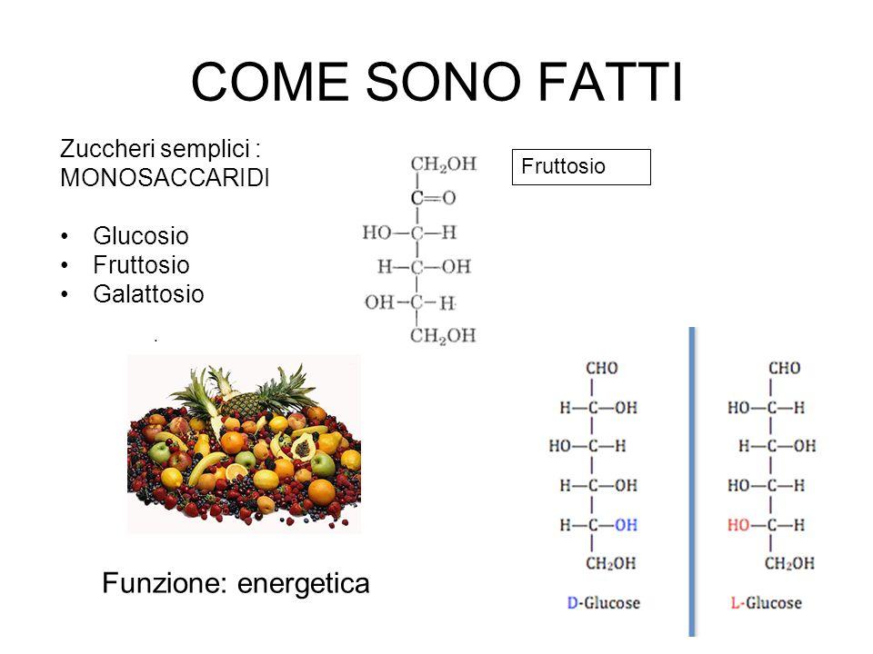 COME SONO FATTI Zuccheri semplici : MONOSACCARIDI Glucosio Fruttosio Galattosio Funzione: energetica Fruttosio