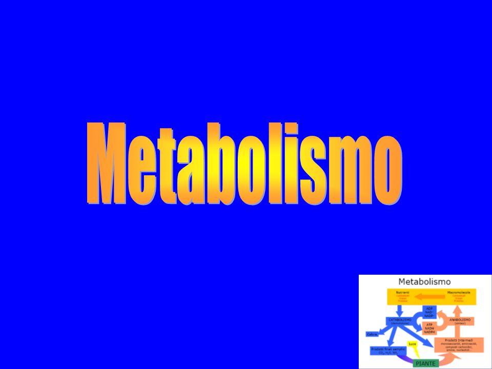 Metabolismo E linsieme di tutte le reazioni chimiche che avvengono negli organismi viventi; tutte queste reazioni producono ed utilizzano energia