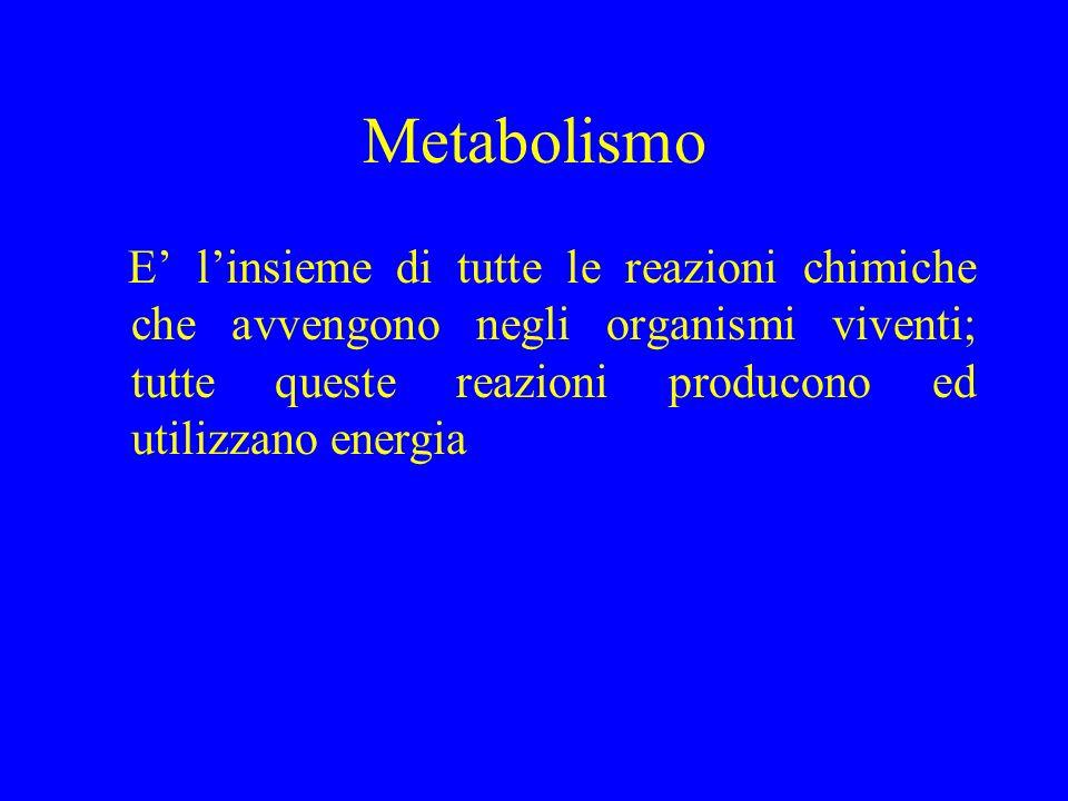 Degradative Sintetiche CATABOLISMO ANABOLISMO