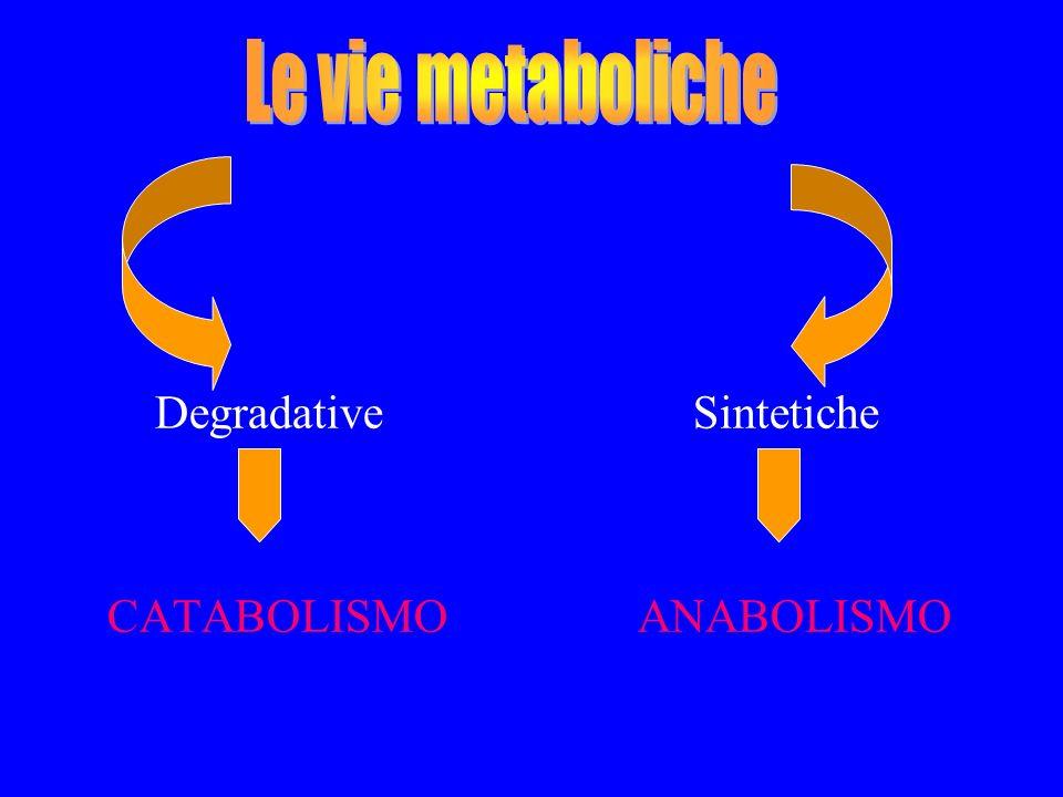 CATABOLISMO è la fase degradativa del metabolismo, in cui le molecole organiche delle sostanze nutrienti (carboidrati, grassi, e proteine vengono convertiti in prodotti finali più semplici (acido lattico, CO 2 ), producendo energia.
