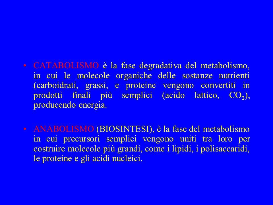 CATABOLISMO è la fase degradativa del metabolismo, in cui le molecole organiche delle sostanze nutrienti (carboidrati, grassi, e proteine vengono conv