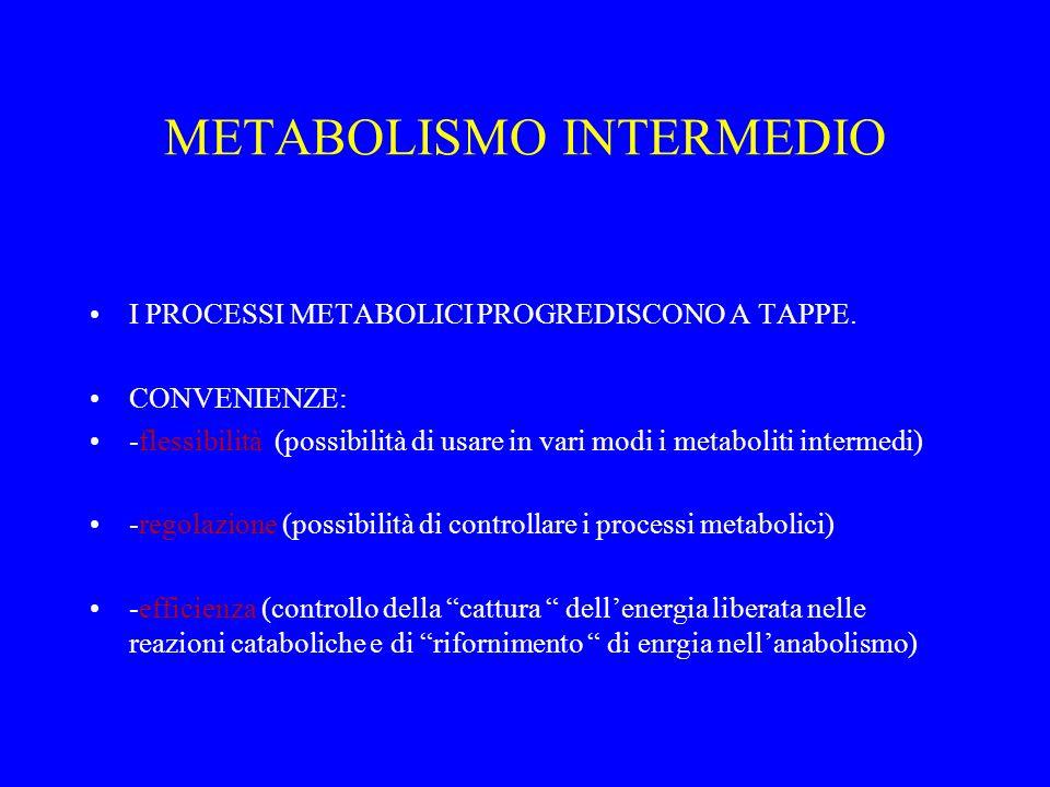 METABOLISMO INTERMEDIO I PROCESSI METABOLICI PROGREDISCONO A TAPPE. CONVENIENZE: -flessibilità (possibilità di usare in vari modi i metaboliti interme