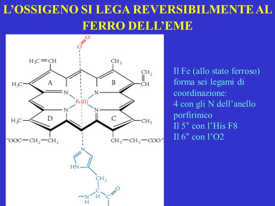 LOSSIGENO SI LEGA REVERSIBILMENTE AL FERRO DELLEME Il Fe (allo stato ferroso) forma sei legami di coordinazione: 4 con gli N dellanello porfirinico Il