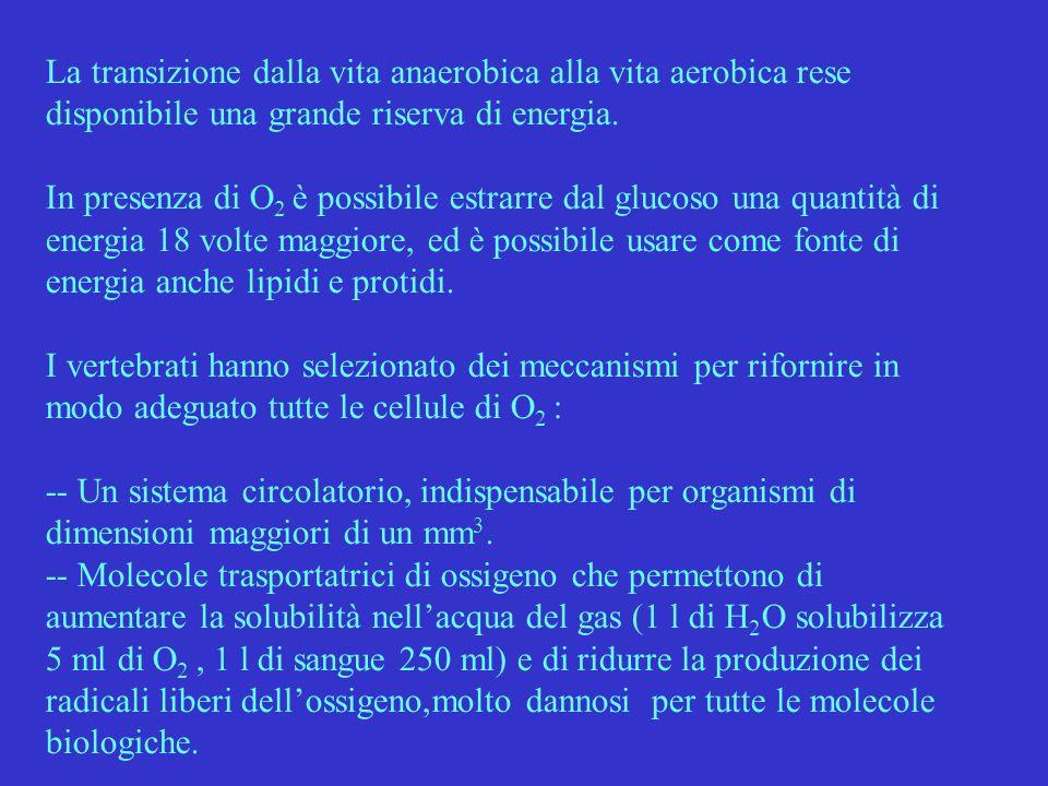 COMPLESSO DELLEME NELLA MIOGLOBINA