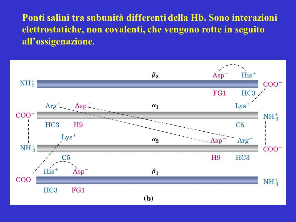 Ponti salini tra subunità differenti della Hb. Sono interazioni elettrostatiche, non covalenti, che vengono rotte in seguito allossigenazione.