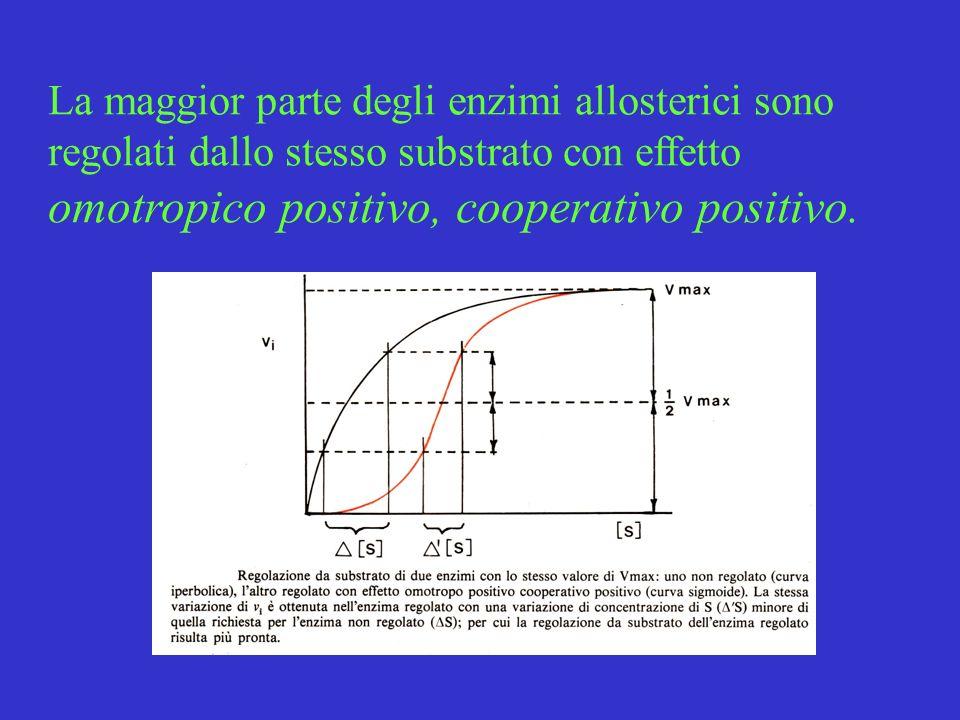 La maggior parte degli enzimi allosterici sono regolati dallo stesso substrato con effetto omotropico positivo, cooperativo positivo.