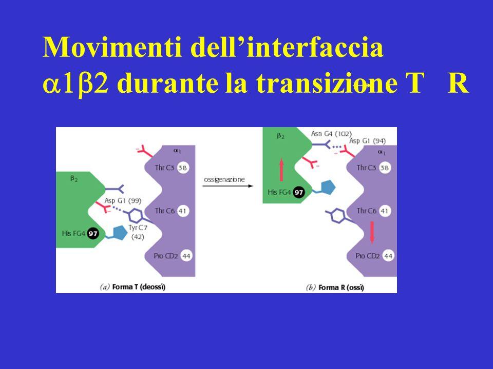 Movimenti dellinterfaccia durante la transizione T R