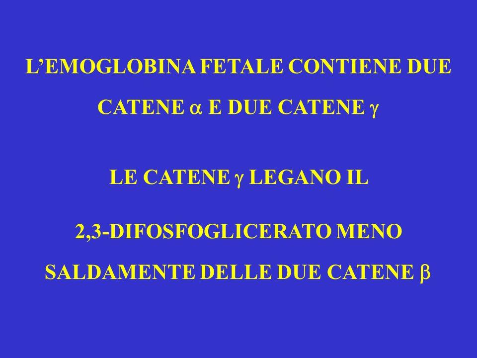 LEMOGLOBINA FETALE CONTIENE DUE CATENE E DUE CATENE LE CATENE LEGANO IL 2,3-DIFOSFOGLICERATO MENO SALDAMENTE DELLE DUE CATENE