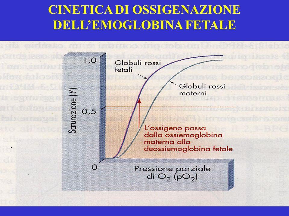 CINETICA DI OSSIGENAZIONE DELLEMOGLOBINA FETALE